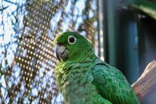 Close Up Shot Of A Nice Parrot