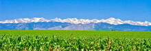 Indian Peaks Farmland Panorama - Corn Field Rows In Spring Looking At Front Range & Indian Peaks, Mount Alice, Mount Orson, Lookout Mountain, Tanima Peak, Eagles Beak, Mahana Peak, & Copeland Mountain
