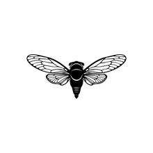 Cicada Design Vector Illustration, Creative Cicada Logo Design Concept Template, Symbols Icons