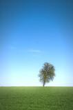 Fototapeta Na sufit - Nieboskłon z nutą minimalizmu