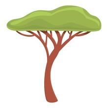 Safari Tree Icon. Cartoon Of Safari Tree Vector Icon For Web Design Isolated On White Background