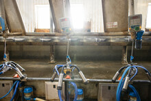 Control Panels And Automatic Milking System In Dairy Farm