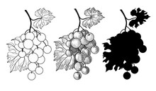 A Set Of Three Bunches Of Grapes. Bunch Of Grapes In Outline, Doodle And Silhouette Style. Drawing Isolated On A White Background. Stock Vector Illustration.