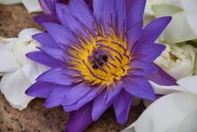 Magnifique Fleur Violette