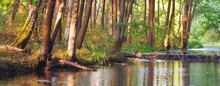 River With A Beaver Dam In A Green Deciduous Forest At Sunset, Trees Close-up, Warm Sunlight. Symmetry Reflections On The Water, Natural Mirror. Tranquil Landscape. Environmental Conservation Theme
