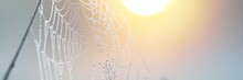 Spider Web, Plants, Dew Drops In A Morning Haze At Sunrise, Close-up. Natural Pattern. Fairy Summer Scene. Macro Photography,, Concept Art, Graphic Resources, Insects, Environmental Conservation