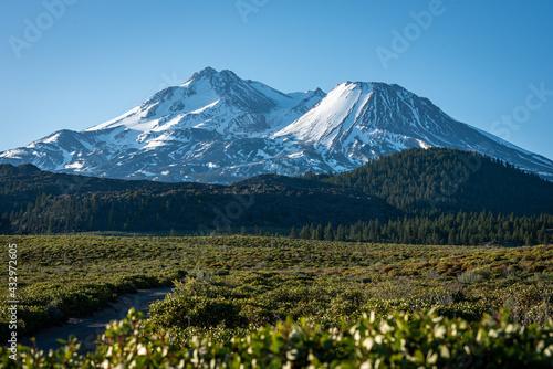Obraz na plátně Field of bushes in front of Mount Shasta