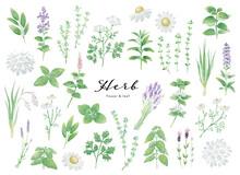様々な種類のハーブ_水彩イラストセット