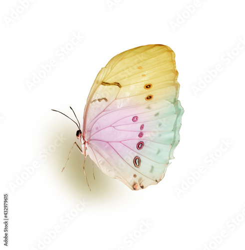 Obraz Color butterfly , isolated on the white - fototapety do salonu