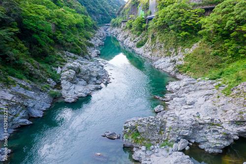 Fototapeta 初夏の大歩危峡