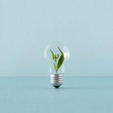 Creative Layout With A Plant Growing Inside The Light Bulb. Green Eco Energy Concept.
