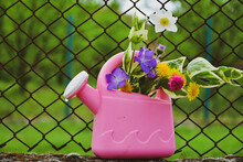 Spring Flowers  In A Pink  Watering Can In A Green  Village .  .Summer Romantic Picture With  Bouquet Of Daisies And Purple Flowers. Spring Decoration