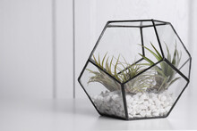 Tillandsia Plants In Florarium On White Table, Space For Text. House Decor
