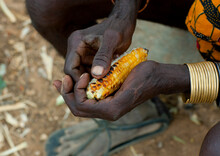 Mukubal With Corn In The Hands, Virie Area, Angola
