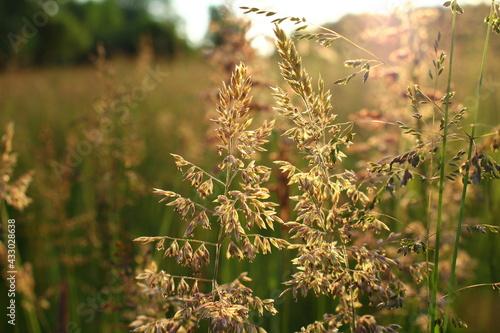 Obraz Sierpniowa łąka - fototapety do salonu