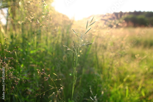 Sierpniowa łąka - fototapety na wymiar