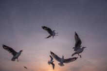 Bird  Silhouette In Sky