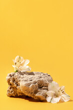 Background For Cosmetic Products Of Natural Yellow Color. Stone Podium With White Flowers. Front View.