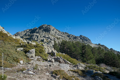 Forest of Scots pine tree, Pinus sylvestris, and high-mountain scrublands Fototapeta