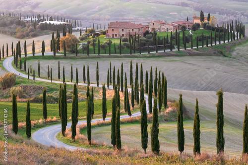Naklejka premium Cypress alley farm and amazing fields near Val d'Orcia Tuscany Siena Italy
