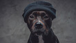 Leinwandbild Motiv Stylish dog bull terrier breeds wearing hat