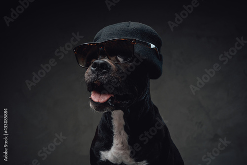 Cheerful and stylish dog with sunglasess and hat - fototapety na wymiar