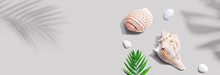 Summer Concept With Seashells And A Palm Leaf