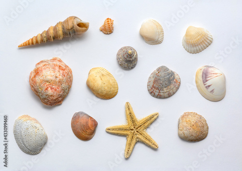 Seashells of various shapes and types. Background Fototapete