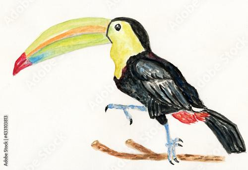 Naklejka premium Toukan bird art