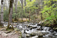 Rushing Stream Through Forest