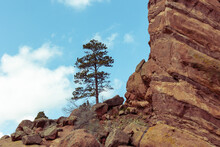 Red Rock Cliff, Lone Pine Tree,