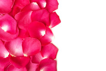 Beautiful Floral Background With Frame Made From Fresh Red Rose Petals On White.