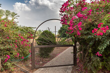 Iron Gate Draped With Bougainvillea, Garden Along The Sea Of Galilee, Israel