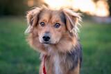 Fototapeta Zwierzęta - Portret psa