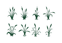 Set Of Different Cattail Silhouette Vector