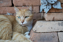 A Female Short Hair Domestic Cat With Green Eyes Resting By The Wall In The Temple.