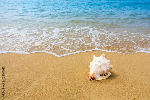 Foto Conch on a beach sand.
