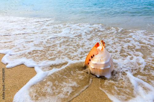 Fotografija Conch on a beach sand.