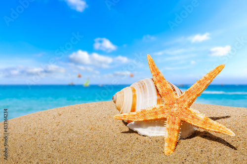 Starfish and conch on a beach sand,summer holiday background. Fototapete