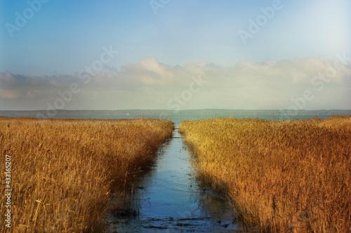 Obraz Krajobraz wodny zalew zarośnięty trzcinami z utworzonym torem wodnym - fototapety do salonu