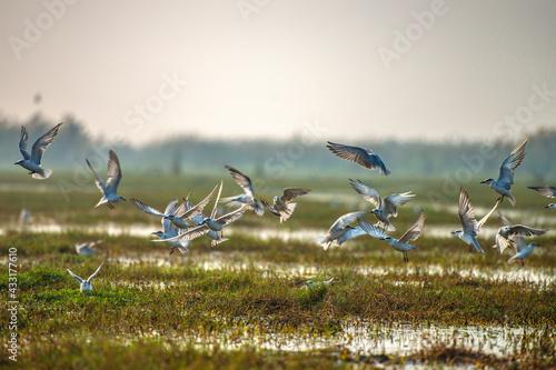 Naklejka premium Wildlife sanctuary India