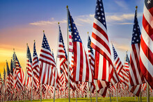 American Flags Standing In The Green Field Against Beautiful Morning Sky. Veterans Day Display.