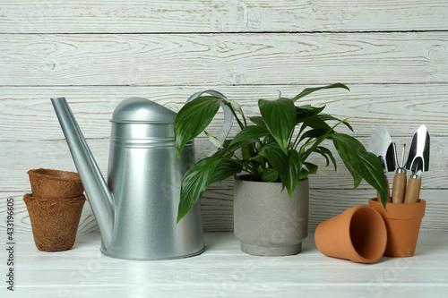 Obraz na plátně Concept of gardening on white wooden background