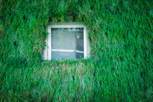 Window On Ivy-covered Wall