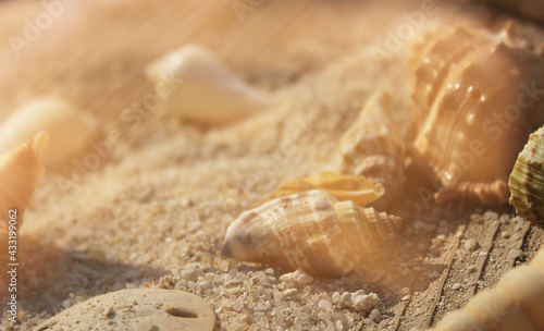 Fotografering Seashell on Boardwalk at Tropical Beach