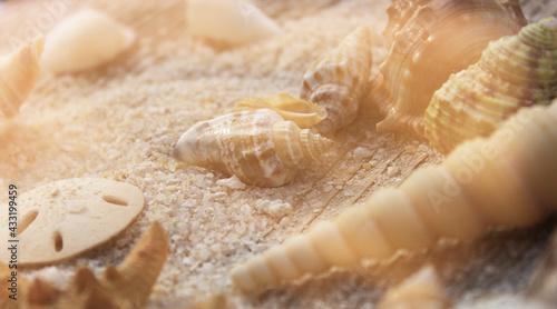 Fotografie, Obraz Seashell on Boardwalk at Tropical Beach