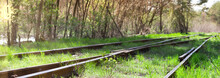 Old Railway Tracks Overgrown With Green Grass. Panorama Of The Road For Trains.