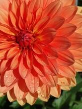 Gocce Di Pioggia Fiore Arancione