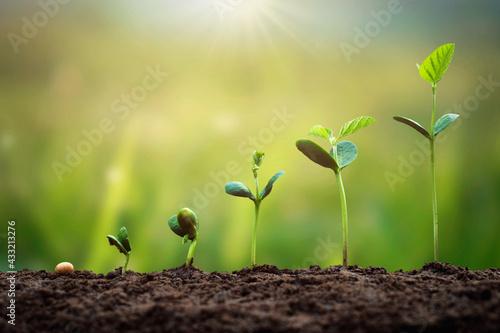 Fotografia soybean growth in farm with green leaf background
