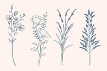 Herbs Wild Flowers Drawing Vintage Style